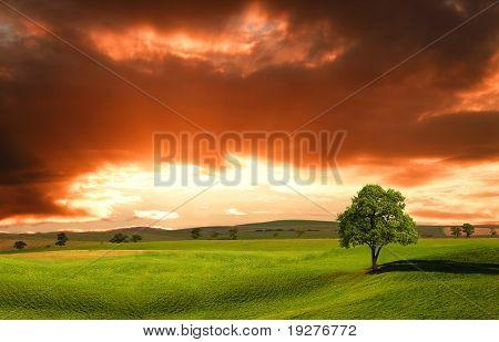 Zonsondergang over boerderij veld met lone tree