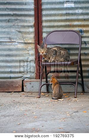 A watchful cat and her kitten rest in an urban space.
