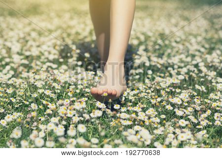 Child's feet in daisy closeup view. Shoeless boy walking on spring meadow. Little boy lying on summer meadow green grass with daisy, image toned