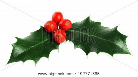 Leaves and cute holly berries white background isolated on white christmas decoration