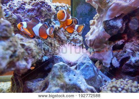 fish in the aquarium with colorful underwater