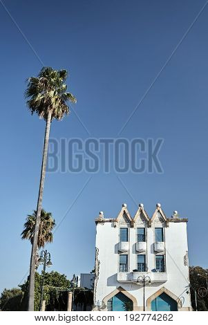 The palm tree and the building in the port city of Kos in Greece