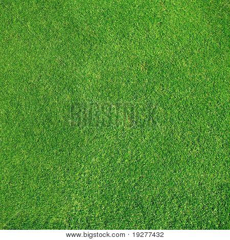 Very detailed golf-green grass texture close up view