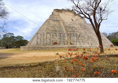 Pyramid known as the House of the Magician in the ruins of Uxmal Mexico