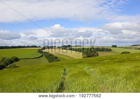 Wolds Barley