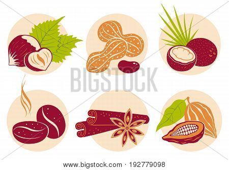 Vector vintage set nuts icons on beige background. Coffee beans coconut star anise cinnamon cocoa and peanuts.