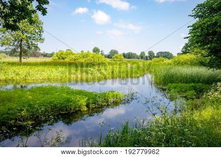 summer landscape with small river