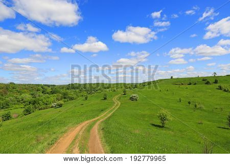 summer landscape with rut road across green hill