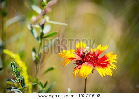 Summer flowers and bee on meadow