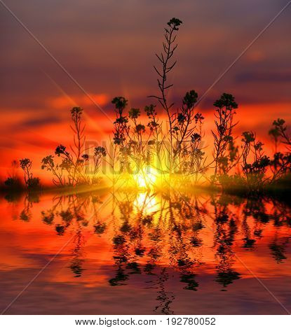 abstract sunset scene with garss and water reflection