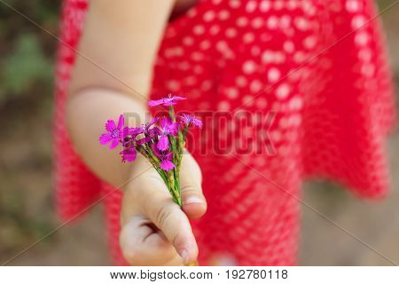 Child gives a wild flower with love romance feelings. Soft focus.