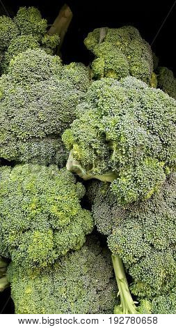 Fresh raw and green heads of broccoli