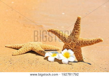 Starfish and tropical flowers at sea shore. Vacation concept