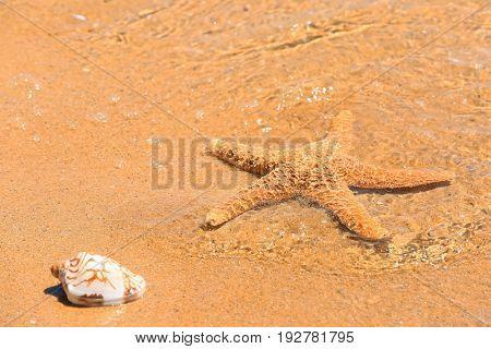 Starfish and shell at sea shore. Vacation concept