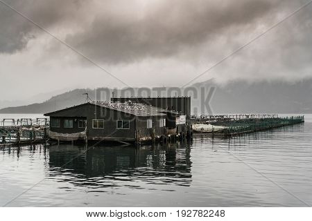 Picton New Zealand - March 12 2017: King Salmon farm in Ruakaka Bay under cloudy sky full of rain. Industrial installation with pens and nets above sea water. Focus on office and human shelter.