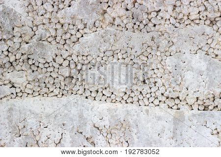 Texture Of The Concrete Wall From The Block