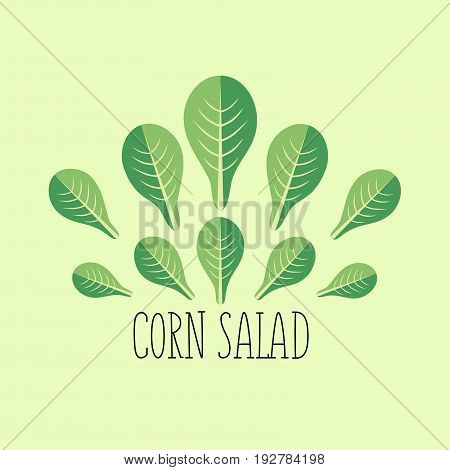 Corn salad leaf vegetable cartoon icon with light green background. Healthy vegetarian food organic farming and salad recipe design