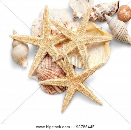Isolated shells starfishes color white background colorful