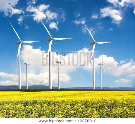 Windmill farm in the rapeseed field