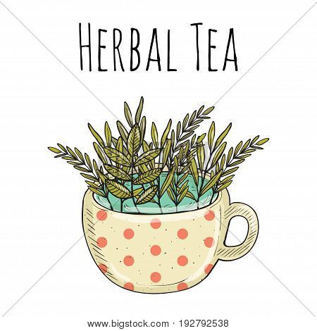 Vector card design with hand drawn tea illustration. Decorative inking background with vintage tea. natural herbal tea for summer mood