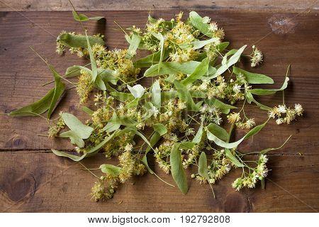 Linden blossom herb fresh flowers tilia background