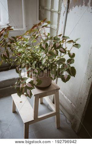 Green plant in clay pot on wooden stand in front of old wooden door in beautiful rustic studio