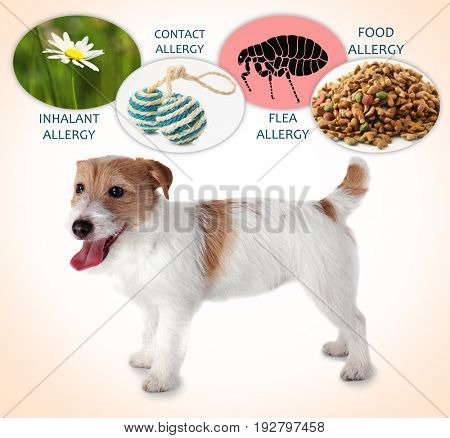 Veterinary concept. Dog and causes of allergy on color background
