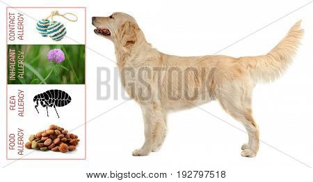 Veterinary concept. Dog and causes of allergy on white background
