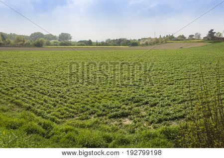 Texture of a cultivated field after passage of tractors and sowing