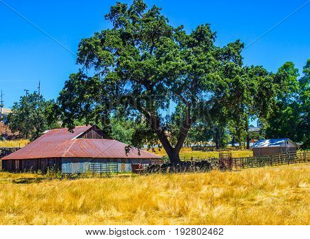 Old Rusty Tin Roof Barn Beneath Giant Oak Tree On Small Ranch