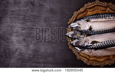 Fresh whole mackerel on a copper plate black background empty space on the left