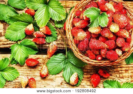 Fresh ripe strawberries in a basket on wooden table with green laves