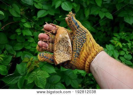 A hand in a tattered glove holds a piece of dry bread against the background of greenery