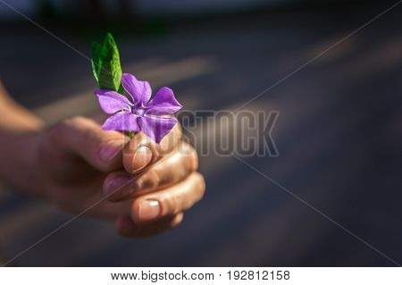 Hand gives a wild flower with love. Sympathy friendly gesture.