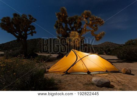 Lighten tent pitched in night desert with joshua trees, Joshua tree national park, California