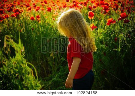 little boy or child with long blonde hair in red shirt in flower field of poppy seed with green stem on natural background summer spring childhood and happiness opium ecology and environment