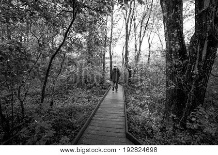 A man walks through the forest on a wooden path, black and white