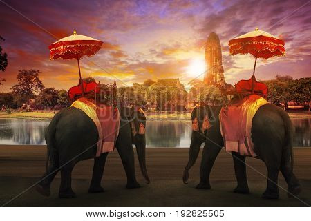elephant dressing with thai kingdom tradition accessories standing in front of old pagoda in Ayuthaya world heritage site use for tourism and multipurpose background backdrop