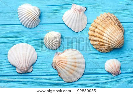 Several sea shells close up. Marine clams on blue background.