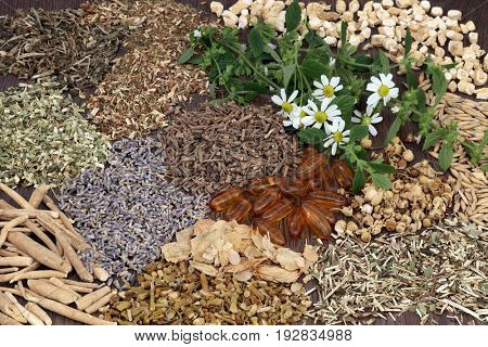 Herb selection used in alternative herbal medicine to heal sleeping and anxiety disorders.