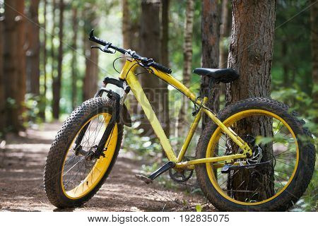 Yellow bicycle fatbike in a coniferous forest, telephoto
