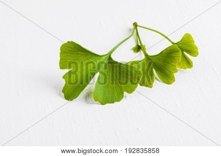 Leaves Of The Ginkgo Tree Isolated On White Background