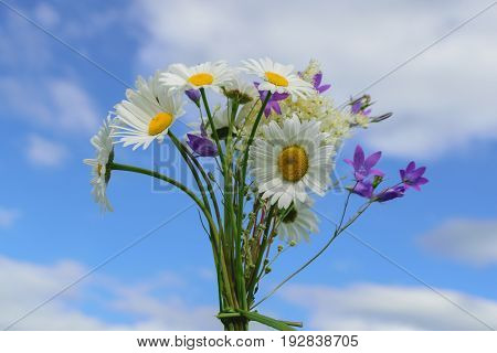 Bouquet wild flowers daisies and bells on the blue sky background