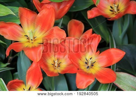 Beautiful image of pretty flowers, open to the warmth of  Summertime sunshine.