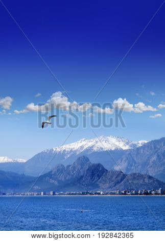 landscape image of high mountains and flying seagull over clear sky in Antalya, Turkey