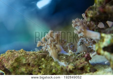 Living corals are very close in nature