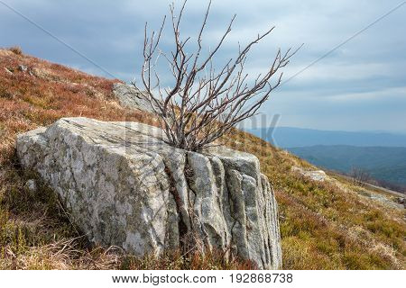 landscape with old stones and dry tree on Runa mountain top CarpathiansUkraina