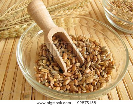 Cereal mixture with grains, wheat, rye, spelt, oat, barley, millet