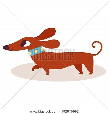 Cute brown cartoon dachshund in a blue collar isolated on white background. Simple modern flat style vector