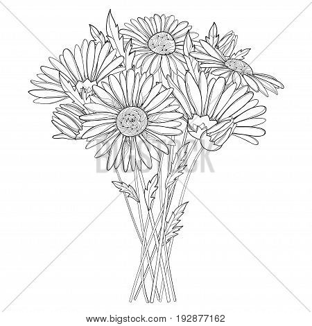 Vector bouquet with outline Chamomile flowers, bud and leaf isolated on white background. Ornate Chamomiles in contour style for summer design, herbal cosmetics, aromatherapy, coloring book.